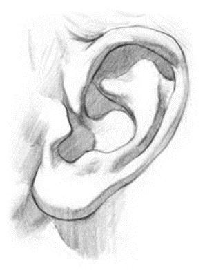 kreslenie-ludského-ucha-Obrazok8