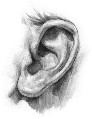 kreslenie-ludského-ucha-Obrazok9